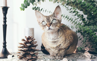 Cat and pinecone