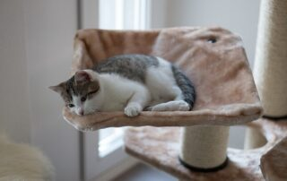 Cat with cat tree