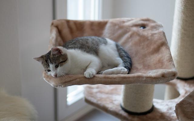 Cat with cat tree