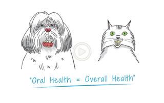 Pet Vaccines