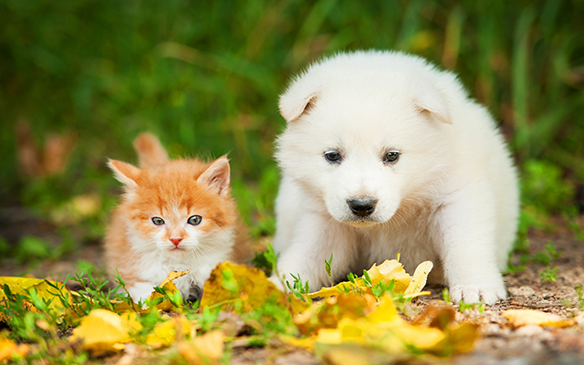 Puppy and Kitten in Leaves