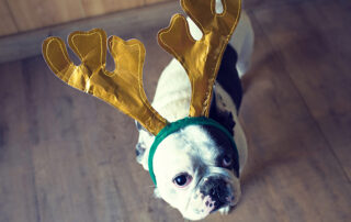 reindeer boxer